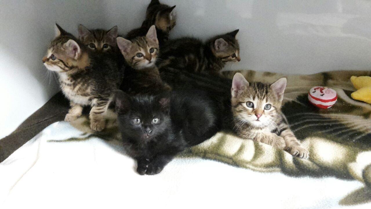 8 junge Katzen ausgesetzt